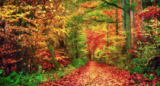 Farzin Salimi - Colorful forest in autumn invites you for a walk