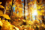Farzin Salimi - Bright autumn in the forest with lots of sun and gold shining leaves