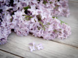 Ekaterina Fedotova - Lilac on weathered wood
