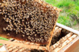 davide guidolin - Open hive, beekeeping