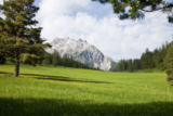 Roland Zihlmann - Alpine meadow