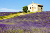 Richard Semik - Chapel with lavender field, Plateau de Valensole, Provence, France
